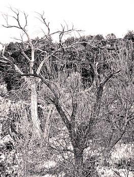 Gregory Dyer - Sedona Arizona Dead Tree