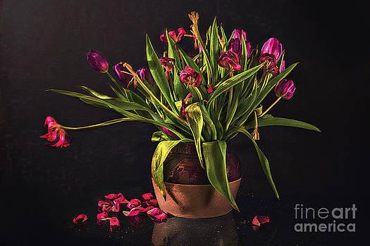 Floral- Pink Tulips by Feryal Faye Berber