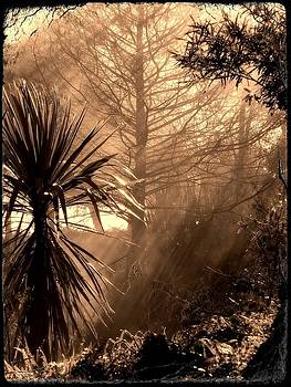 Sepia Forest by Raewyn Forbes