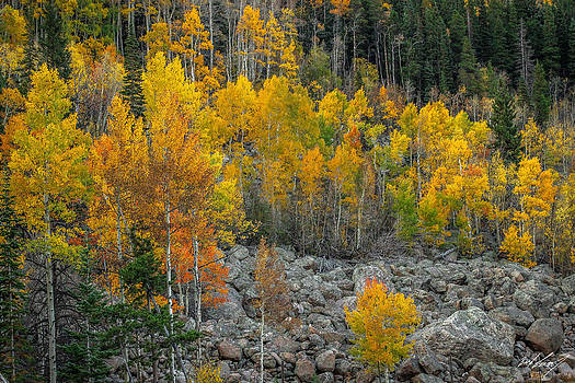 September Colors by Zach Connor