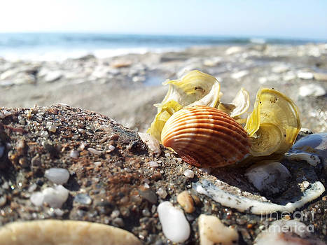 Shell And Beach by Stefano Piccini