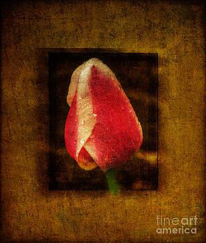 Singular Sensation by Barbara Youngleson