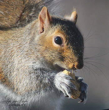 Snack time by Lisa Jayne Konopka