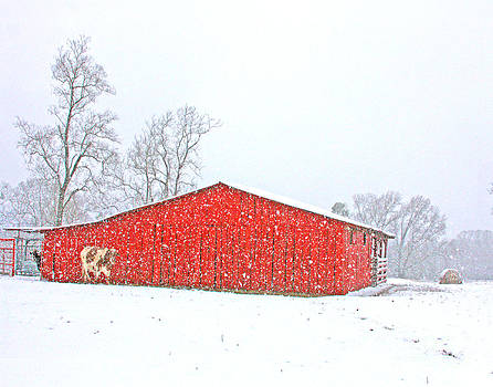 Snow On The Farm by Pam Carter