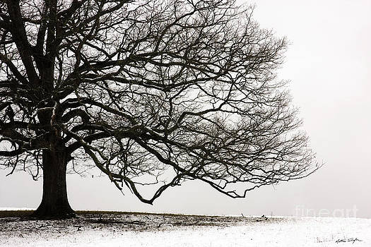 Snow Tree 2010 by Matthew Turlington