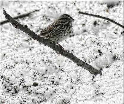 Joe Bledsoe - Snowbird