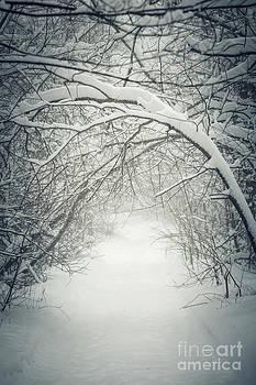 Elena Elisseeva - Snowy winter path in forest