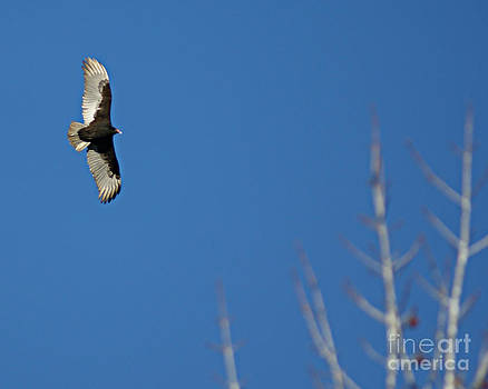 Soaring Above The Trees by Sherry Vance
