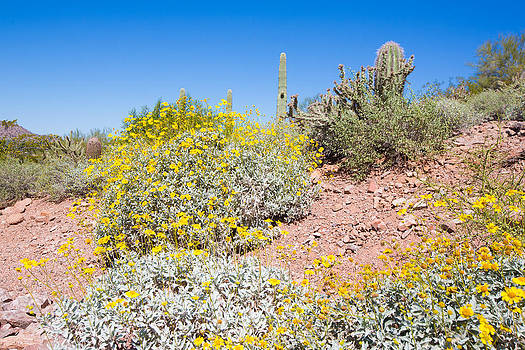Sonoran Desert Plants by Jodi Jacobson