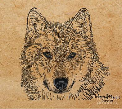 Sorein Wolf by Helena Marais