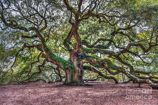 Dale Powell - Southern Angel Oak Tree