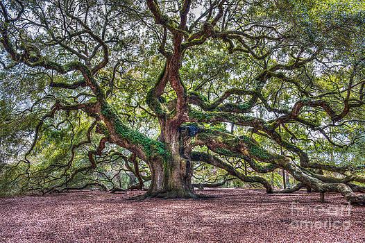 Dale Powell - Southern Angel Oak Tree
