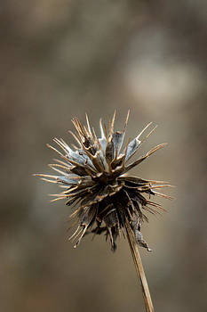 Spiked 6 by Dawn Hagar