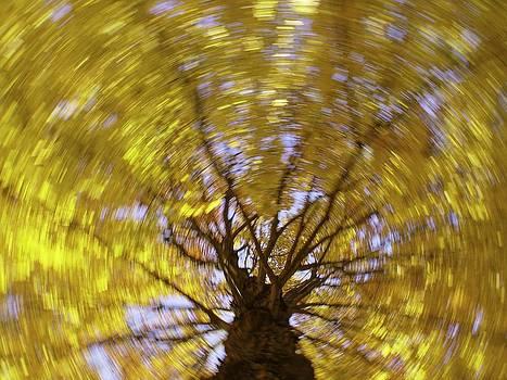 Spinning Maple by Bernhart Hochleitner