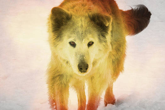 Spirit Dog by Andrea Dale