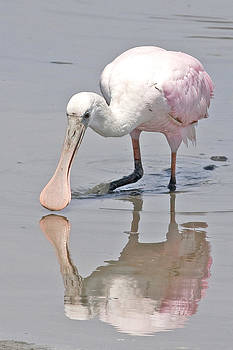 Terry Shoemaker - Spoonbill and Reflection