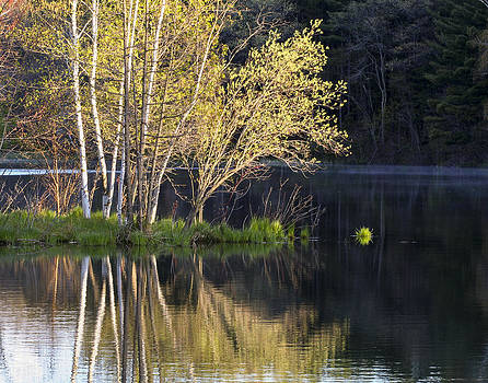 Spring at Allen Lake by Barbara Smith