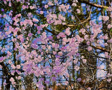 Spring at Last 2 by Larry Bodinson