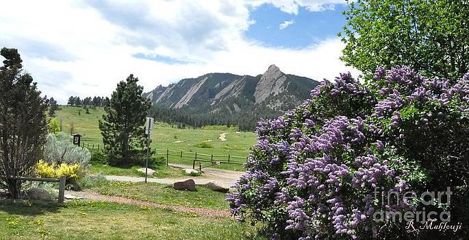 Lilacs And Flatirons Boulder Colorado by R Mahlouji