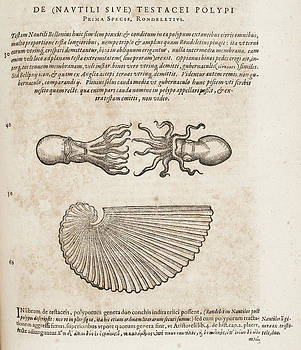 Squid by British Library