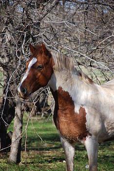 Stallion by Thea Wolff