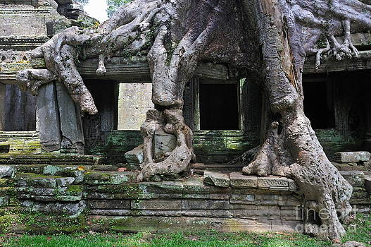 Strangler fig tree roots on Preah Khan Temple by Sami Sarkis