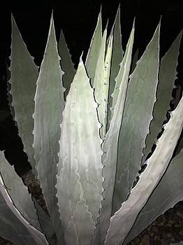 Succulent by Patricia Januszkiewicz