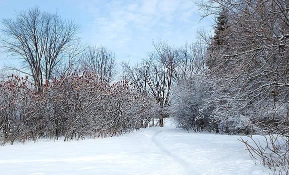 Sumacs alongside the path. by Rob Huntley