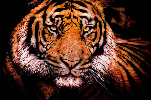 Sumatran Tiger by Chad Davis