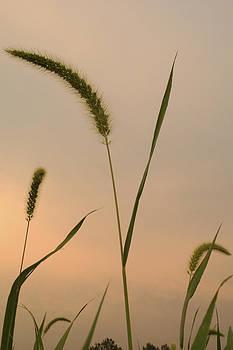 Daniel Kasztelan - summer sunset