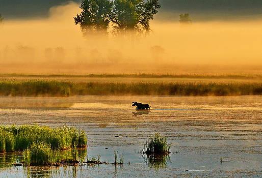 Sun Kissed Moose by Annie Pflueger