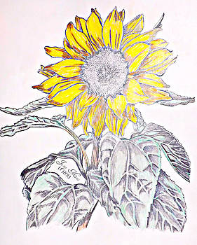 Sunflower by Janet Moss