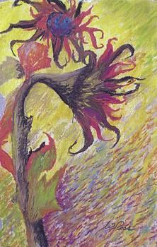 Randy Ross - Sunflower