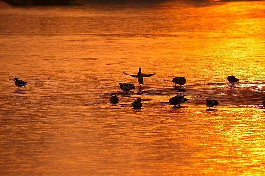Sunrise and go by Youli Xia