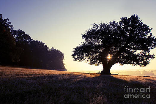 Sunrise Tree by Greg Bajor