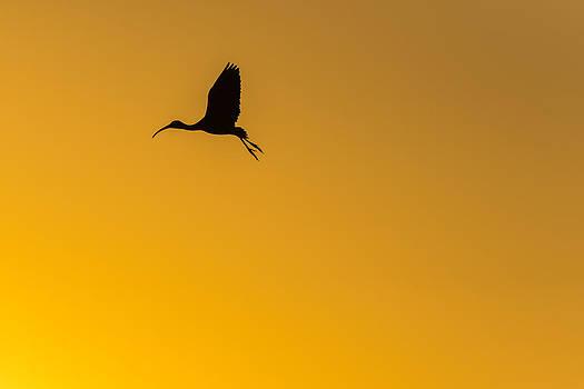 Sunset Flight by Joseph Rossbach