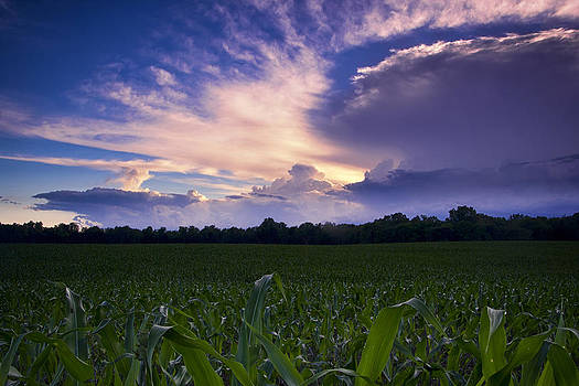 Sunset over corn field by Bailey and Huddleston