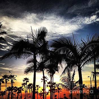 Sunset through the Palms by Jim Gray
