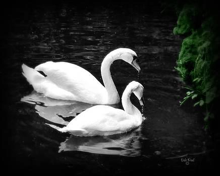 Swan Lake by Dale Paul