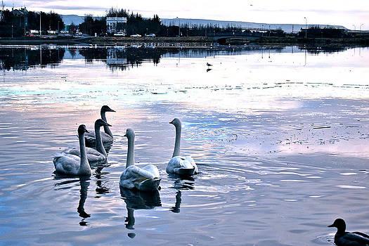 Swan Lake by Yen