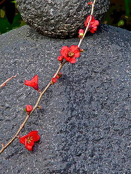Larry Knipfing - Temple Plum Blossom 1