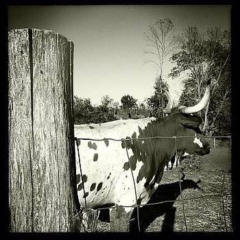 Texas Longhorn Mommy by Deirdre Ryan