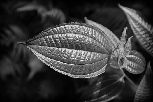 Charles Lupica - Textured leaf