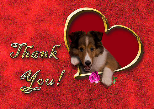 Jeanette K - Thank You Sheltie
