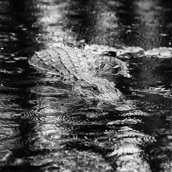 Thomas Schreiter - The beauty in the rain