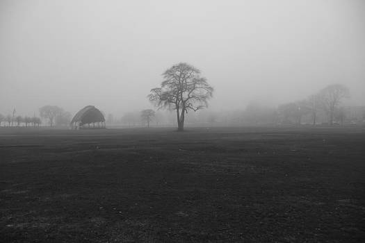 The Fog Tree by Keith McGill