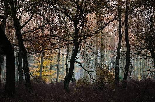 The Forest Run by Nicole Frischlich