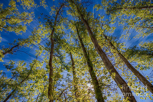 The Forrest Rays by Bob Mintie