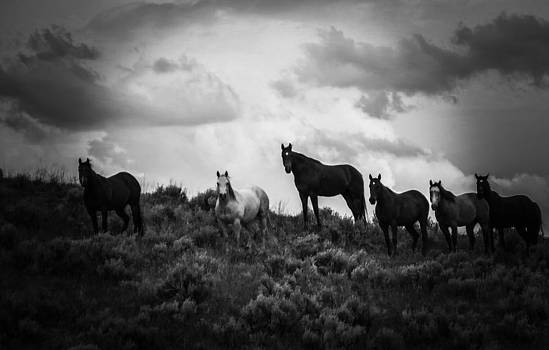 The Gathering by Robert Lowe