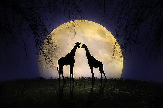 The Giraffes at Midnight by Jennifer Woodward
